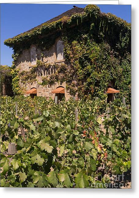 Napa Valley And Vineyards Greeting Cards - Tra Vigne Restaurant in St Helena Napa California DSC1685 vertical Greeting Card by Wingsdomain Art and Photography