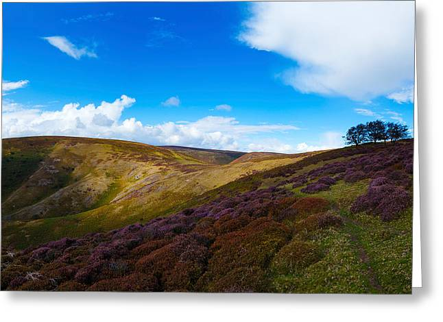 Hilltop Scenes Greeting Cards - Track Between Round Hill And Cross Greeting Card by Panoramic Images