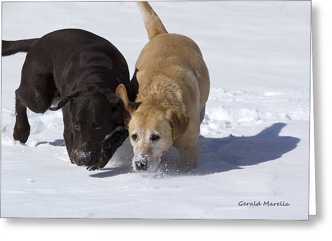 Dog In Snow Greeting Cards - Tracking Greeting Card by Gerald Marella