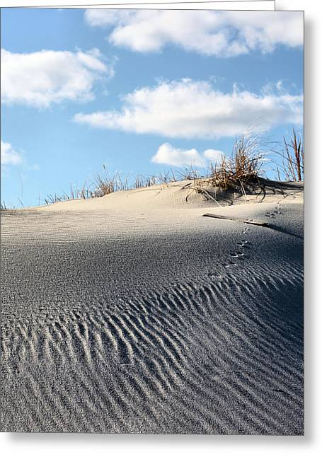 Animal Tracks Greeting Cards - Tracks Greeting Card by JC Findley