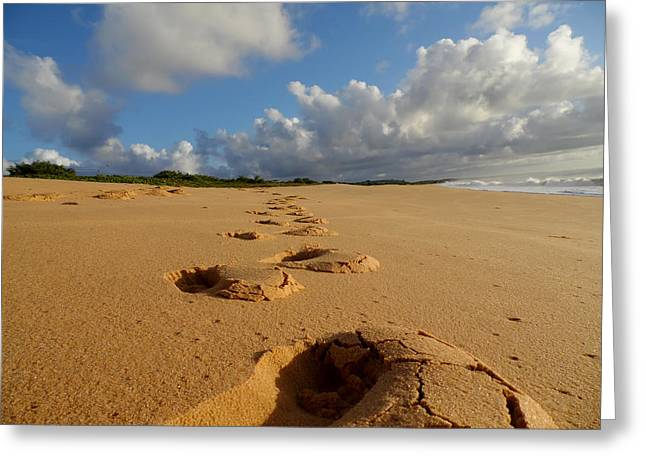 Ground Level Greeting Cards - Tracks on the Beach Greeting Card by Mountain Dreams