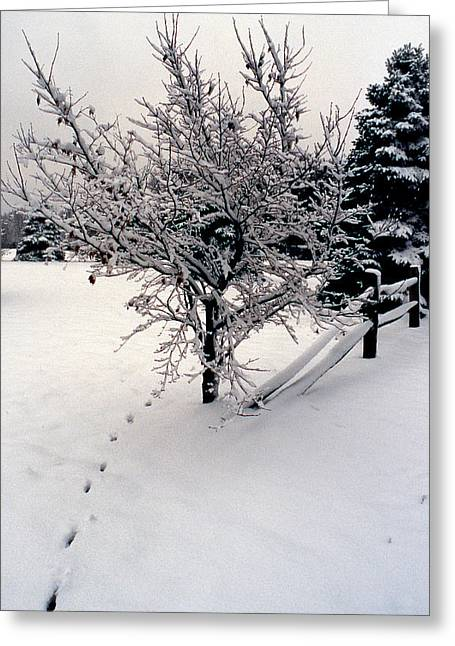 Urban Winter Scenes Greeting Cards - Tracks Greeting Card by Skip Willits