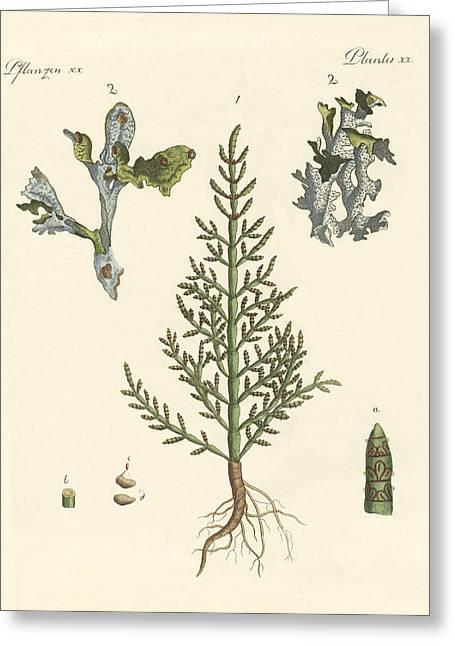 Trading And Medicinal Plants Greeting Card by Splendid Art Prints
