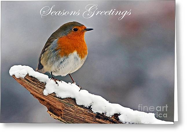 Scoullar Greeting Cards - Traditional Christmas Robin Greeting Card by Paul Scoullar