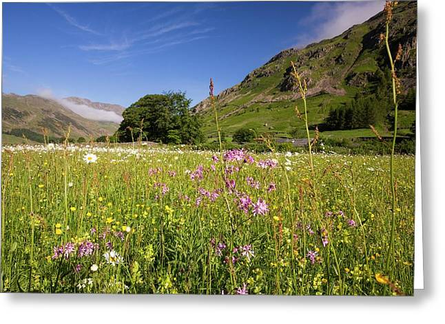 Traditional Hay Meadows Greeting Card by Ashley Cooper