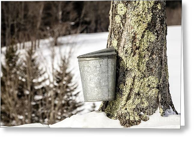Traditional Sap Bucket On Maple Tree In Vermont Greeting Card by Edward Fielding
