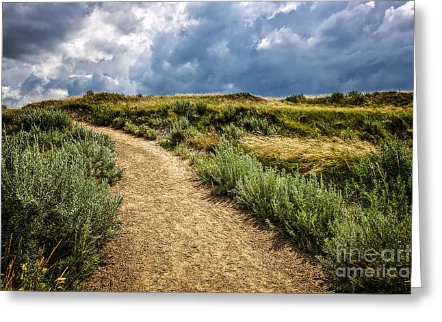Dinosaur Provincial Park Greeting Cards - Trail in Badlands in Alberta Canada Greeting Card by Elena Elisseeva