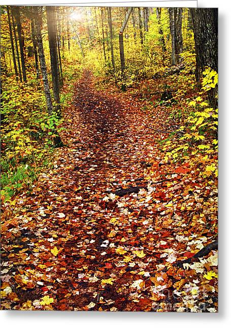 Autumn Greeting Cards - Trail in fall forest Greeting Card by Elena Elisseeva