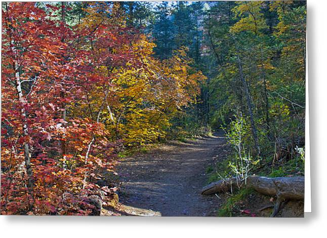 West Fork Greeting Cards - Trail of Maples Greeting Card by Brian Lambert