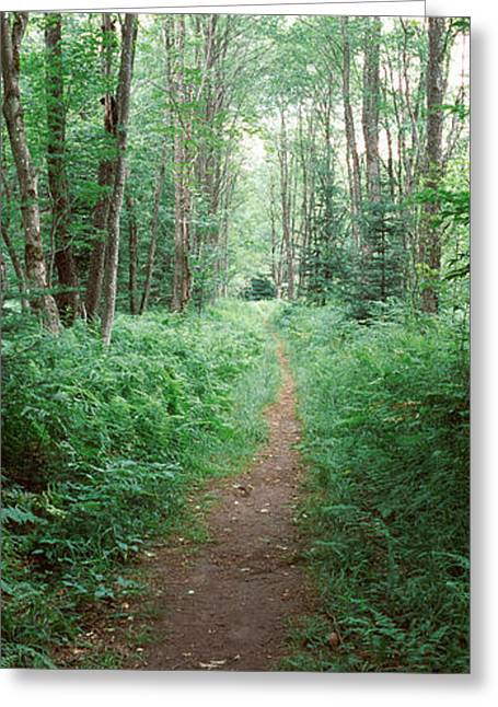 Old Forge Greeting Cards - Trail Passing Through A Forest Greeting Card by Panoramic Images