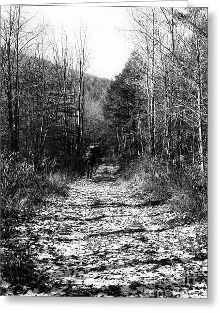 Esem8chart.com Greeting Cards - Trail Greeting Card by Sarah Holenstein
