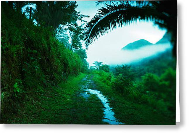 Belize Greeting Cards - Trail Through A Rainforest, Cayo Greeting Card by Panoramic Images