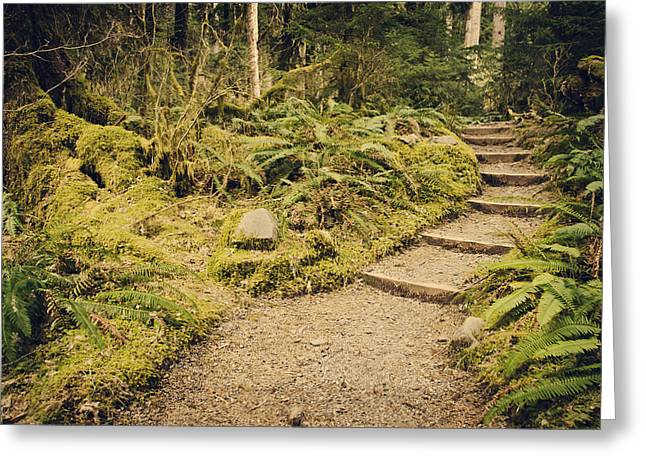 Moss Green Greeting Cards - Trail Through the Moss Greeting Card by Heather Applegate