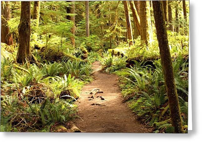 Trail through the Rainforest Greeting Card by Carol Groenen