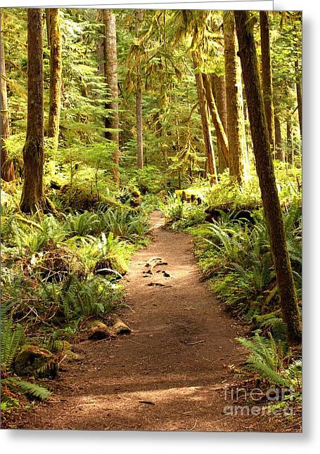 Northwest Photographs Greeting Cards - Trail through the Rainforest Greeting Card by Carol Groenen