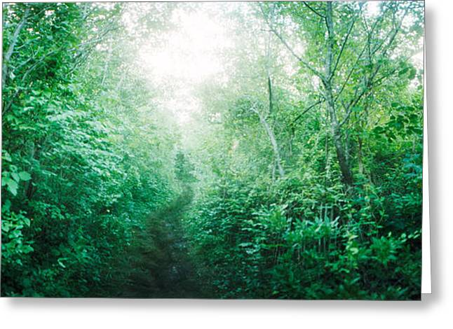 York Beach Greeting Cards - Trail Through The Woods Along Fort Greeting Card by Panoramic Images