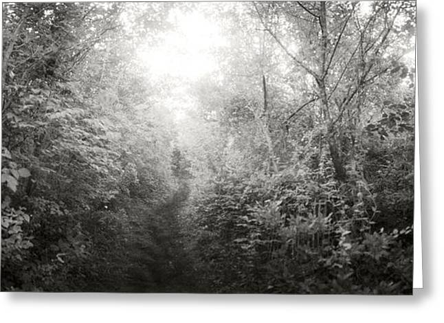 York Beach Greeting Cards - Trail Through The Woods At Fort Tilden Greeting Card by Panoramic Images
