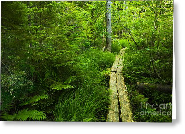 Acadia National Park Photographs Greeting Cards - Trail Through the Woods Greeting Card by Diane Diederich