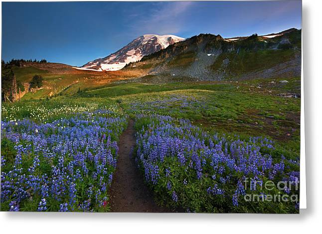 Mt. Rainier Greeting Cards - Trail to Majesty Greeting Card by Mike Dawson