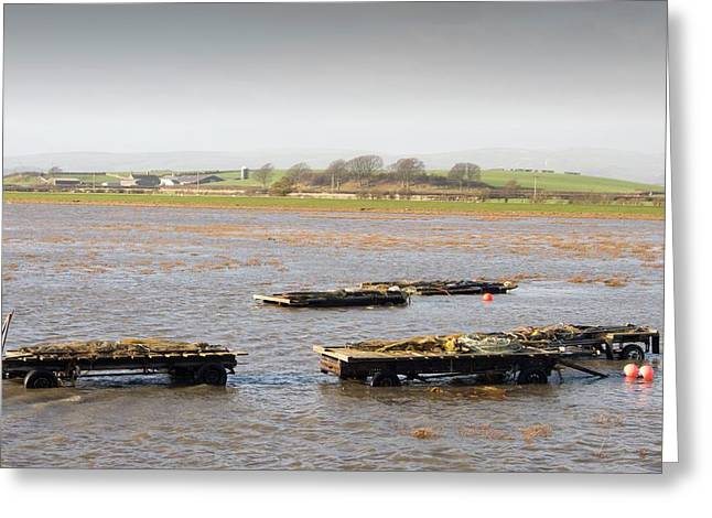 Trailers Covered By Flood Water Greeting Card by Ashley Cooper