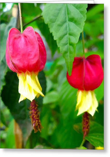 Cultivation Paintings Greeting Cards - Trailing Abutilon or Lantern  Flower Greeting Card by Lanjee Chee