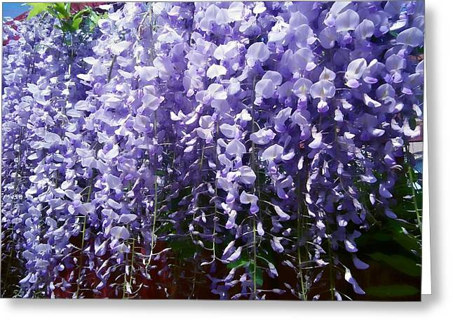 Trailing Wisteria Greeting Card by Susan Knott