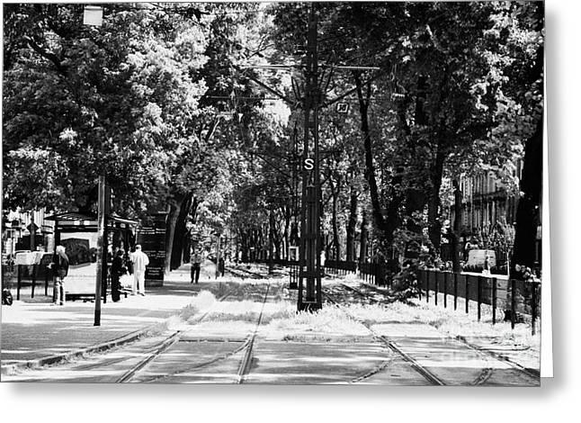 Untidy Greeting Cards - Tram Line Stop Overgrown With Weeds And Deep In The Trees In Josefa Dietla Krakow Greeting Card by Joe Fox