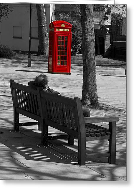 Chelsea Greeting Cards - Tramp on a bench bw Greeting Card by David French
