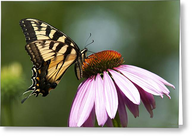 Butterfly On Flower Greeting Cards - Tranquil Butterfly Greeting Card by Christina Rollo