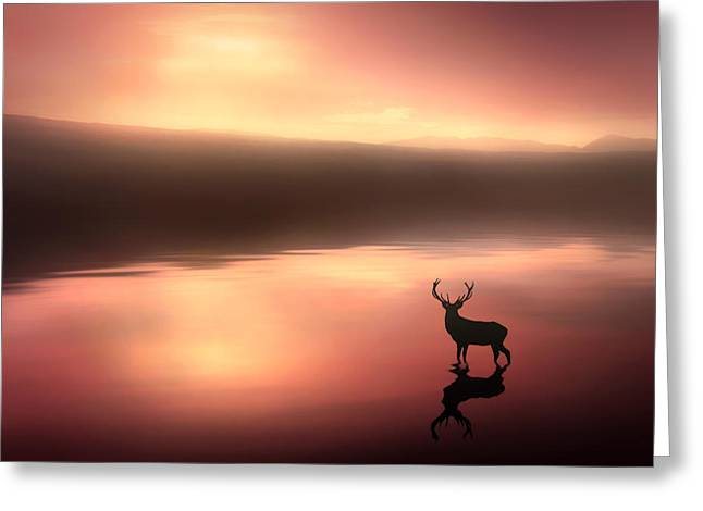 Pink Sunset Greeting Cards - Tranquil Dawn Greeting Card by Jennifer Woodward