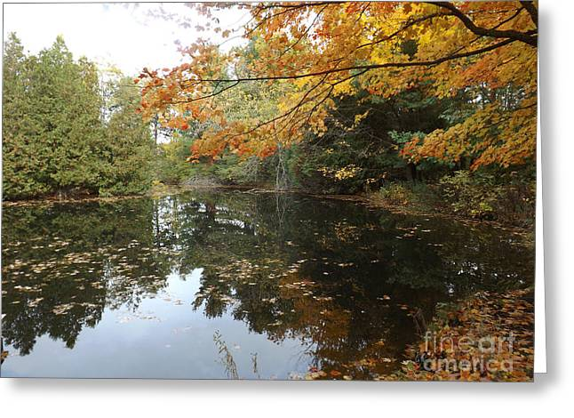 Autumn Leaf On Water Greeting Cards - Tranquil Getaway Greeting Card by Brenda Brown