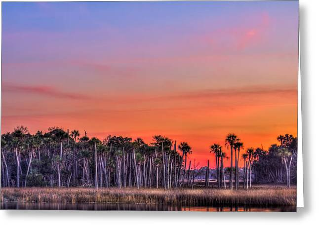 Wild Life Photographs Greeting Cards - Tranquil Hammock Greeting Card by Marvin Spates