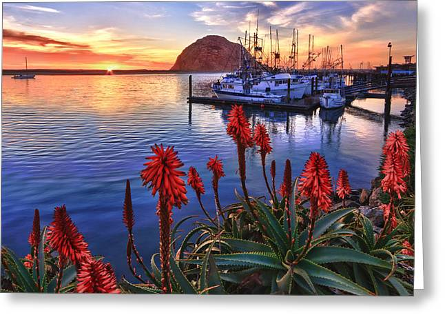 Morro Bay Greeting Cards - Tranquil Harbor Greeting Card by Beth Sargent