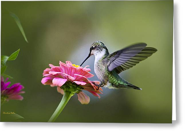 Ruby Throated Hummingbird Greeting Cards - Tranquil Joy Greeting Card by Christina Rollo