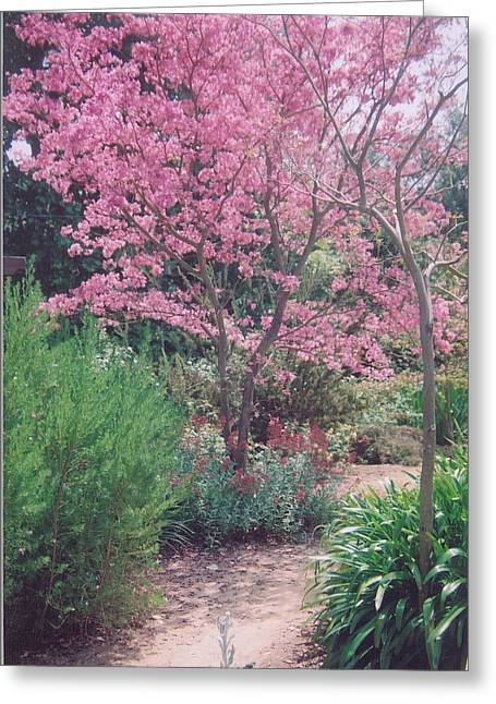 Robert Bray Greeting Cards - Tranquil Pathway Greeting Card by Robert Bray