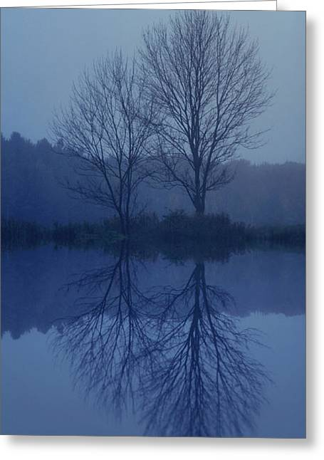 Dismal Greeting Cards - Tranquility Greeting Card by Carrie Ann Grippo-Pike