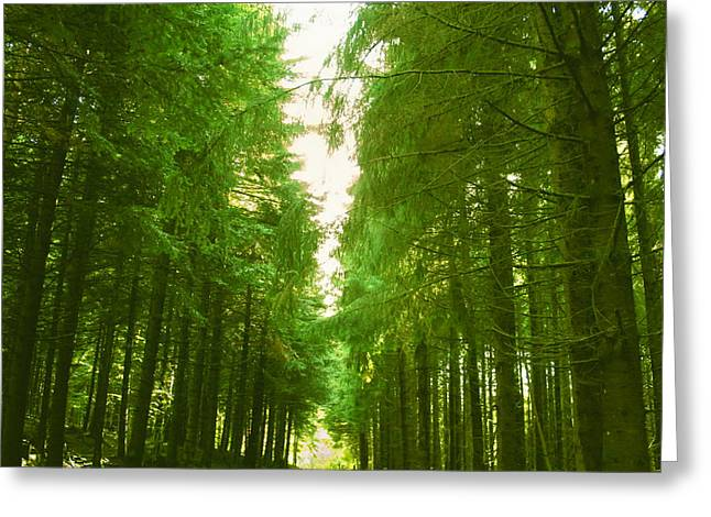 Woodland Scenes Greeting Cards - Tranquility - French Forest Greeting Card by Nomad Art And  Design