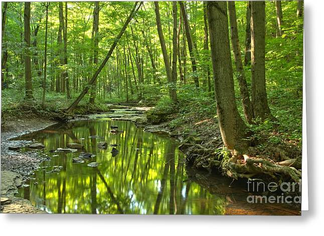 Mcconnells Mill Greeting Cards - Tranquility In The Forest Greeting Card by Adam Jewell
