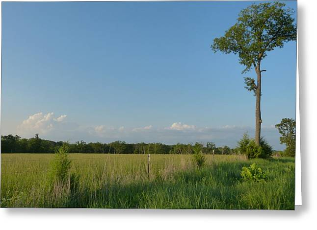 Walnut Tree Photograph Greeting Cards - Tranquility Greeting Card by Julie Atkinson