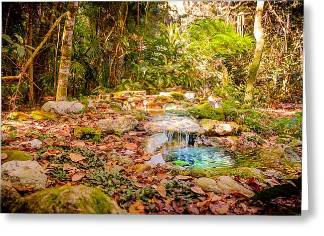 Gainesville Greeting Cards - Tranquility Greeting Card by Louis Ferreira