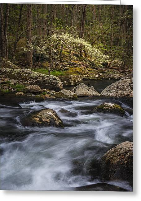 Dogwood Greeting Cards - Tranquility Greeting Card by Mike Lang