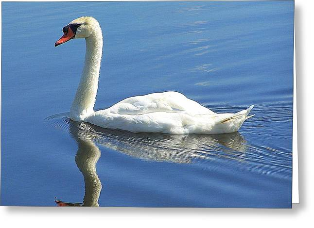 Quite Greeting Cards - Tranquility Greeting Card by Frozen in Time Fine Art Photography