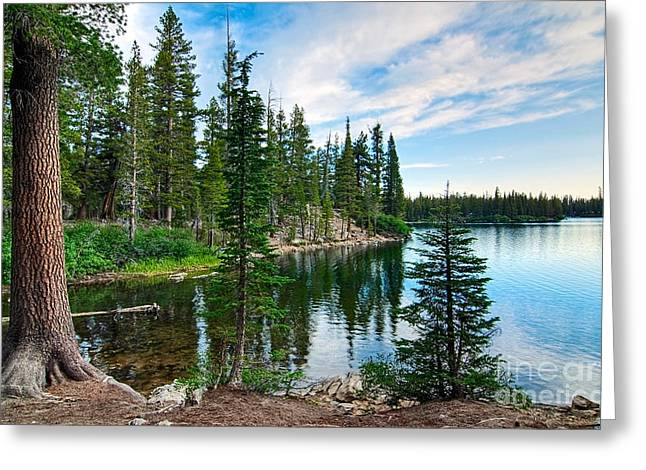 Pine Tree Photographs Greeting Cards - Tranquility - Twin Lakes in Mammoth Lakes California Greeting Card by Jamie Pham