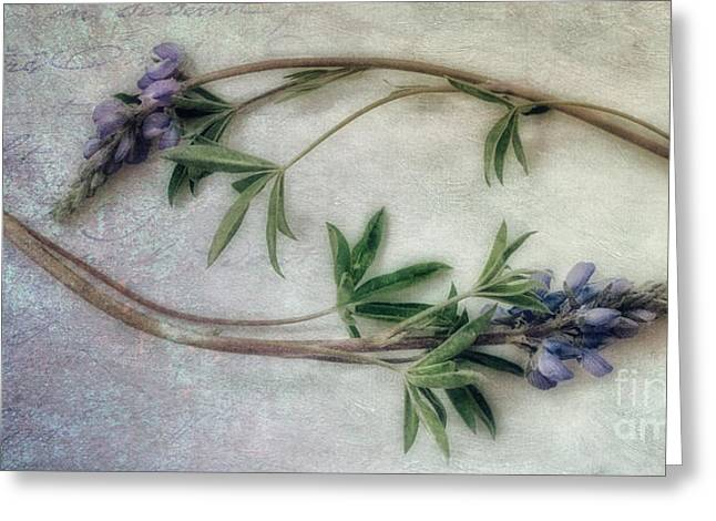 Stilllifes Greeting Cards - Transience Greeting Card by Priska Wettstein