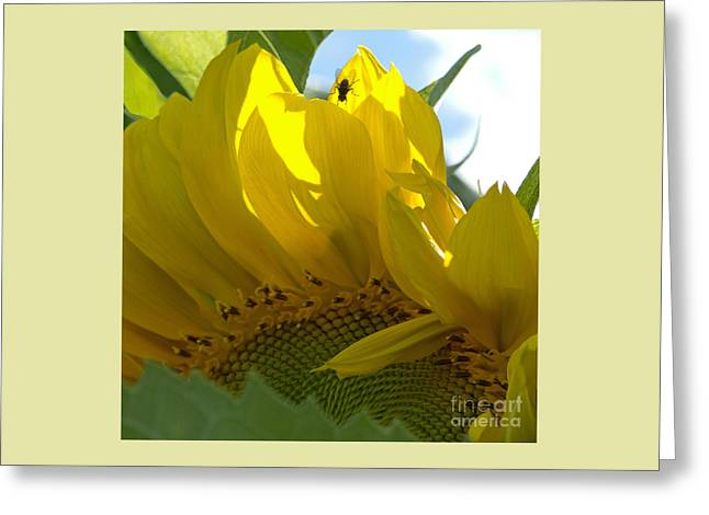 Translucence Greeting Cards - Translucence Greeting Card by Ann Horn