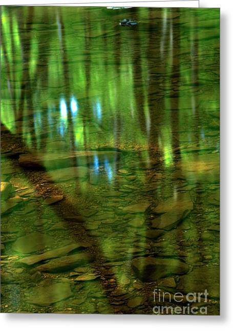 Hells Run Creek Greeting Cards - Translucent Forest Reflections Greeting Card by Adam Jewell
