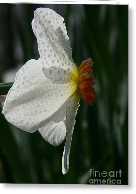 Fine Art Flower Photography Greeting Cards - Transparency  Greeting Card by Neal  Eslinger