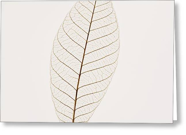 Transparent Leaf Greeting Card by Kelly Redinger