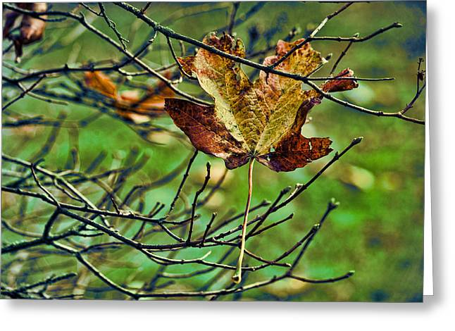 Fallen Leaf Greeting Cards - Trapped Greeting Card by Bonnie Bruno
