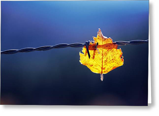 Green Leafs Greeting Cards - Trapped Leaf On Barbed Wire Greeting Card by Mikel Martinez de Osaba